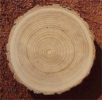 отделка деревом